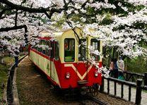 trein met boom met kersenbloesem in Alishan - Alishan - Taiwan