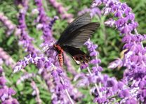 vlinder wuling farm - Wuling - Taiwan - foto: Marloes Wijnhoff