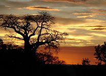 zonsondergang - Tarangire - Tanzania