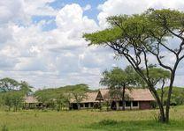 veld voor de lodge - Ikoma Bush Camp - Serengeti - Tanzania