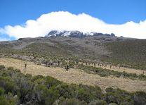 Kilimanjaro beklimming - Kilimanjaro - Tanzania - foto: Lokale agent