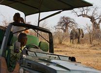 Olifant gespot tijdens de safari - Ruaha Rivier Lodge - Tanzania - foto: Niels van Gijn - Foxes Safari Camps