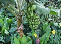 Farmhouse Valley bananenboom - Armera River Lodge - Tanzania - foto: Martijn Visscher