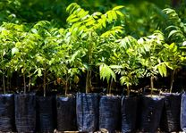 Thailand - bomen planten voor toeristen