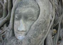 boedha hoofd in boomwortels - Ayutthaya - Thailand