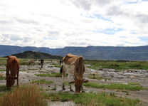 vee - Lake Natron - Tanzania - foto: Martijn Visscher