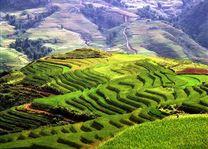 rijstterassen Sapa - Sapa - Vietnam