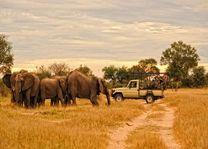 Olifanten tijdens safari - Zambia - foto: Lokaal agent