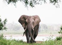 olifant - Gonarezhou National Park - Zimbabwe - foto: Lokaal agent