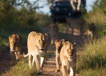 kapama safari - Kapama - Zuid-Afrika