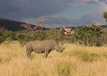 Neushoorn in het Kololo Game Reserve - Kololo Lodge - Zuid-Afrika - foto: Kololo Lodge