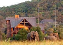 Olifanten in het Kololo Game Reserve - Kololo Lodge - Zuid-Afrika - foto: Kololo Lodge