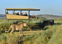 cheetah tijdens game drive in Shamwari Game Reserve - Shamwari Game Reserve - Zuid-Afrika - foto: Archief