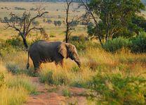 welgevonden game reserve - welgevonden game reserve - Zuid-Afrika - foto: Alex Jansen Flickr