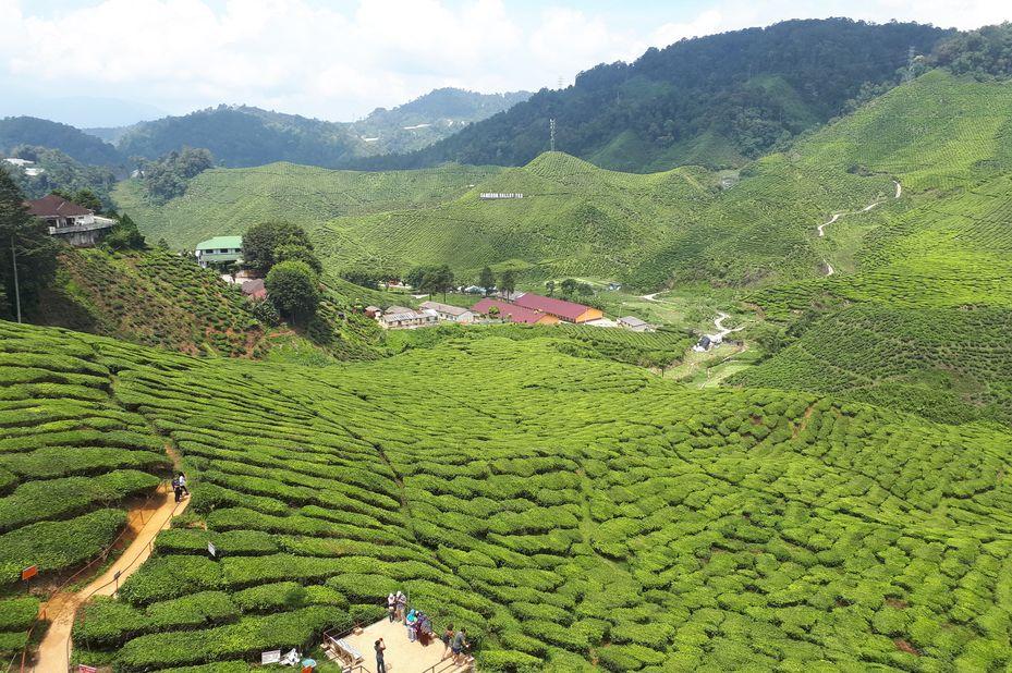 Cameron Highlands in Maleisië (klantfoto)