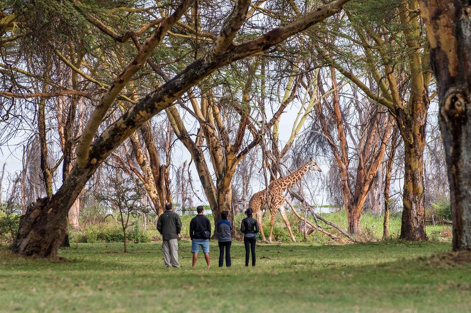 Lake Naivasha Sopa Lodge - giraffe - Kenia - foto: Lake Naivasha Sopa Lodge