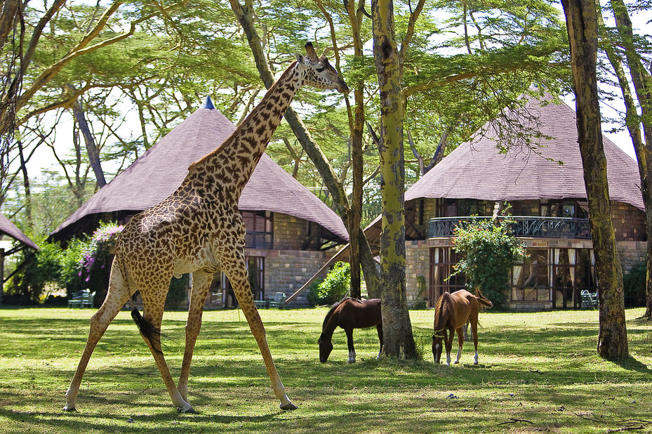 Lake Naivasha Sopa Lodge - tuin - Kenia - foto: Lake Naivasha Sopa Lodge