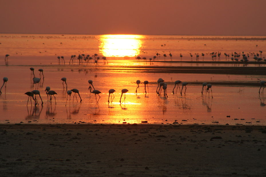 Nata Lodge - flamingos - Sua Pan - Botswana - foto: Nata Lodge