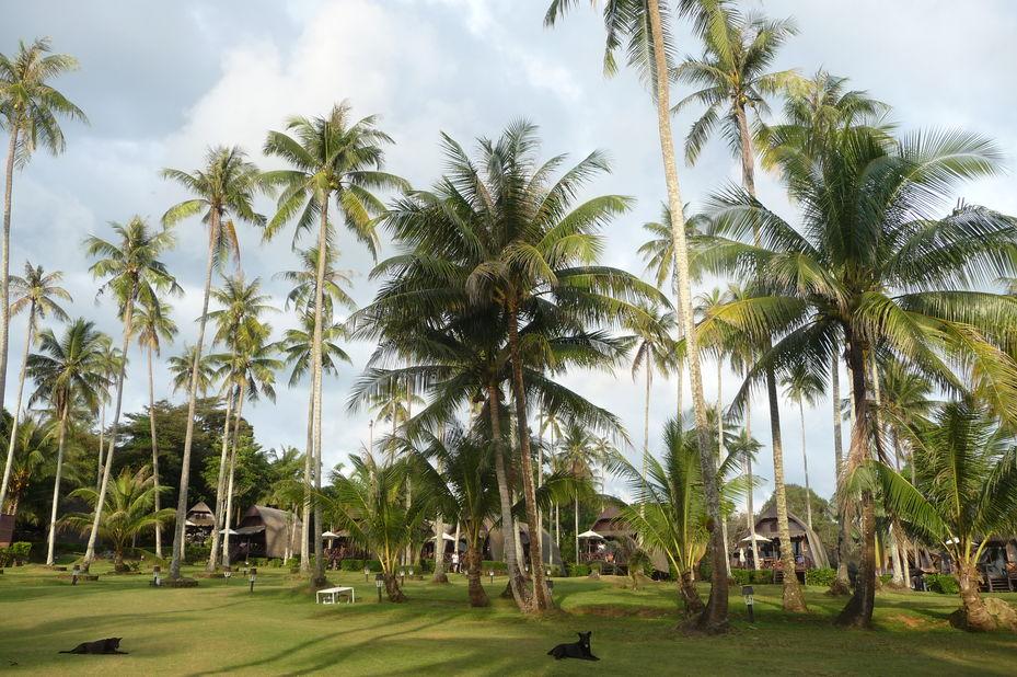 huisjes in tuin Koh Kood Beach Resort - Koh Kood - Thailand - foto: Floor Ebbers