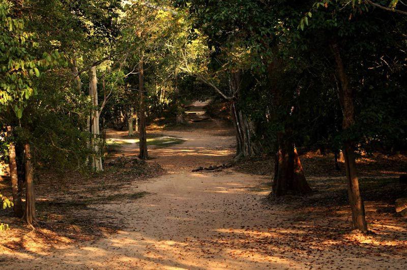 Jungle van Sambor Prei Kuk - Sambor Prei Kuk - Cambodja