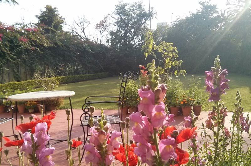 bloemetjes in de zonneschijn - Jas Vilas - India - foto: Mieke Arendsen