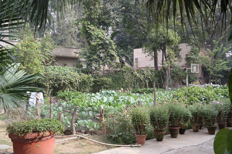 groene omgeving - Lutyens Bungalow - India - foto: Mieke Arendsen