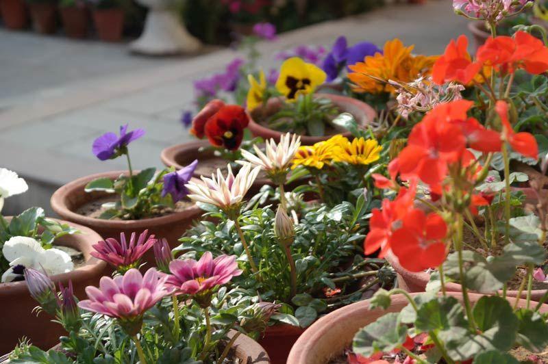 leuke bloemetjes - Samode Haveli - India - foto: Mieke Arendsen