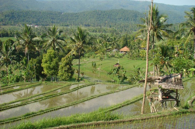 uitzicht - Puri Lumbung - Bali/Munduk - Indonesië