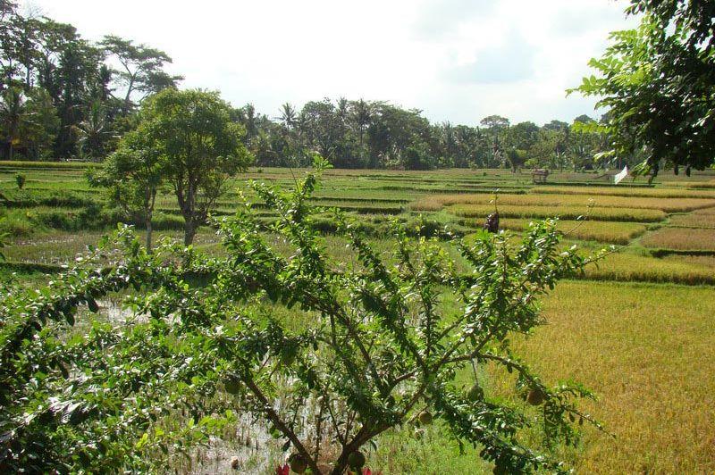uitzicht - Ubud Village Resort - Bali/Ubud - Indonesië