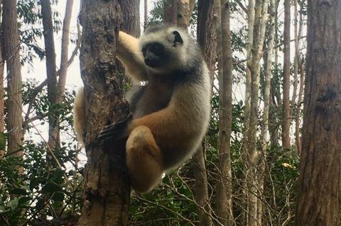 Klantreactie huwelijksreis Madagaskar