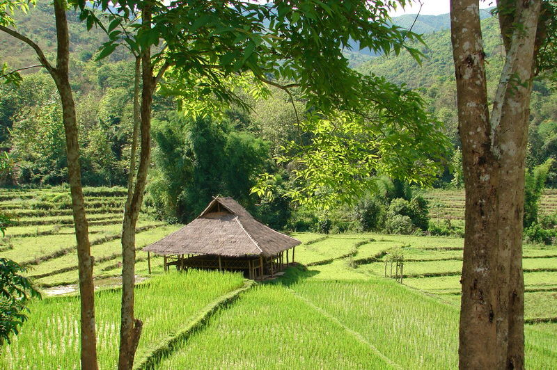 rijstveld bij lodge - Kamu Lodge - Kamu Village - Laos