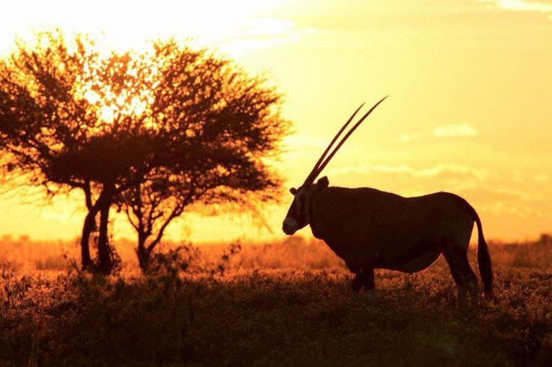 Zonsondergang - Intu Afrika Zebra Lodge - Namibië