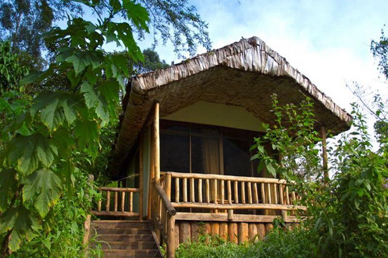 engagi lodge - bwindi - Oeganda