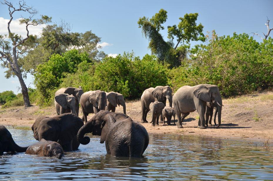 olifanten Chobe National Park - Botswana - foto: Muchenje Safari Lodge