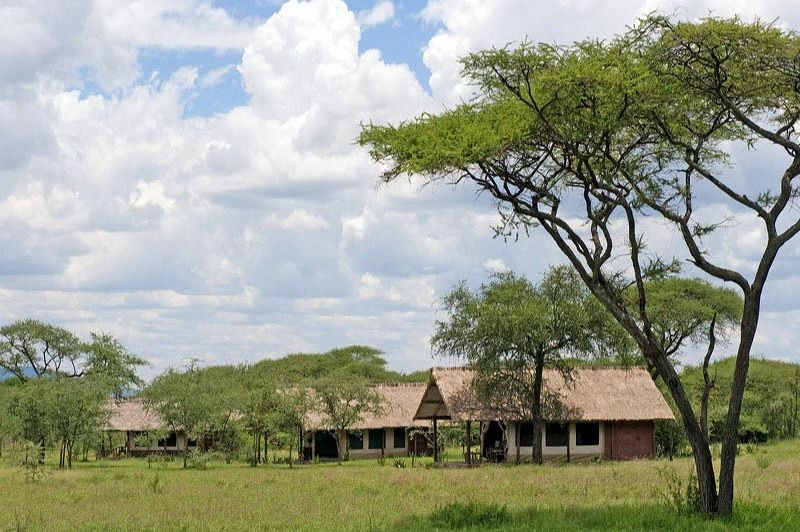 veld voor de lodge - Ikoma Bush Camp - Serengeti - Tanzania