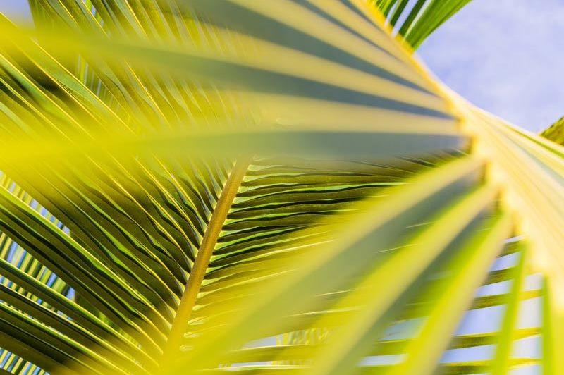 Palm bij The Manta Resort - The Manta Resort - Tanzania - foto: The Manta Resort