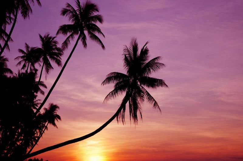 palmboom bij zonsondergang in Phu Quoc - Phu Quoc - Vietnam