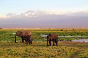 Amboseli National Park - olifanten - Kenia - foto: pixabay