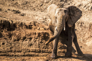 Ashnil Samburu Camp - olifant - Samburu Game Reserve - Kenia - foto: Ashnil Samburu Camp