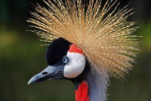 Bharatpur - Keoladeo - Kraanvogel - India - foto: pixabay