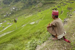 Cordillera - man bij rijstterrassen - Filipijnen - Intas - CTTO