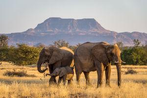 Damaraland - olifanten - landschap - Namibie - foto: Damaraland Camp