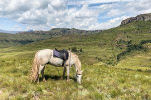 Drakensbergen - paard - Zuid-Afrika
