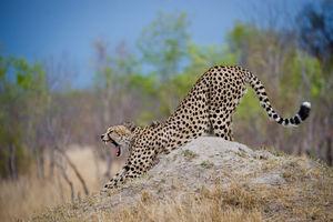 Hwange National Park - Safari - Zimbabwe