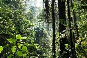 Jungle - Noord Sumatra - Indonesie - foto: unsplash