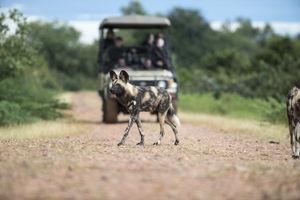 Kakuli Bush Camp - safari - South Luangwa - Zambia