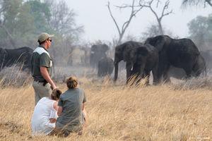 Kazile Island - bushwalk - Zambezi - Namibie - foto: Divava Okavango Resort