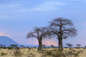 Kwihala Camp - landschap - Ruaha National Park - Tanzania - foto: Kwihala Camp