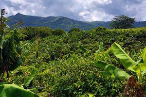 Lakaz Chamarel - omgeving - Mauritius - foto: Lakaz Chamarel