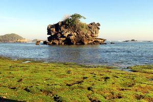 Malang - Zeewier - Rotsen - Java - Indonesie - foto: flickr